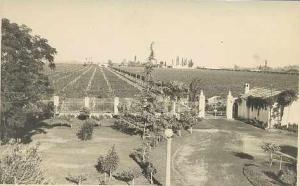 Vista de viñedos de Maipú desde FFCC